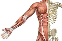 Osteopatic Body Structure